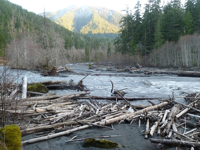 Woody Debris and fine sediment where none existed before the Elwha River dam removal
