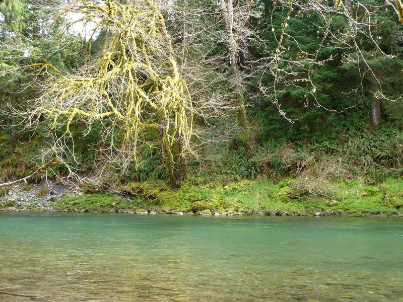 Around here waters west for Sol duc river fishing